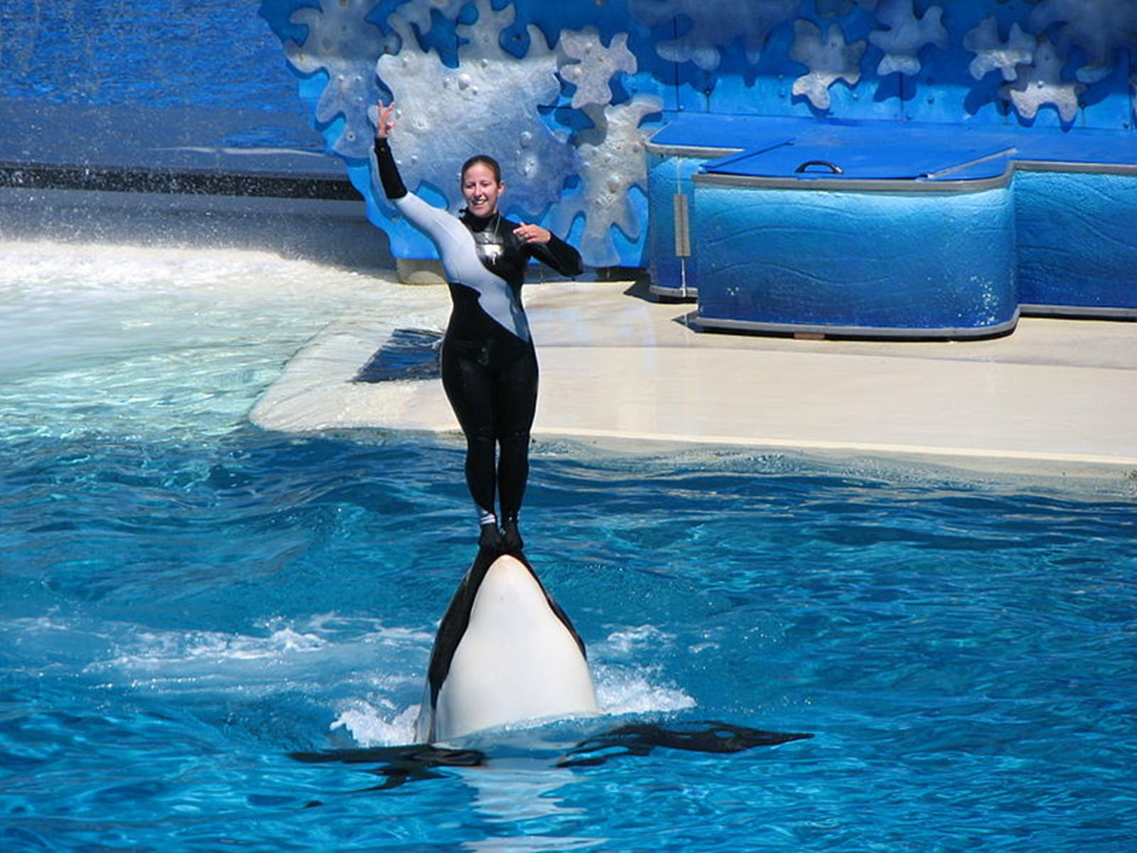 Shamu in SeaWorld