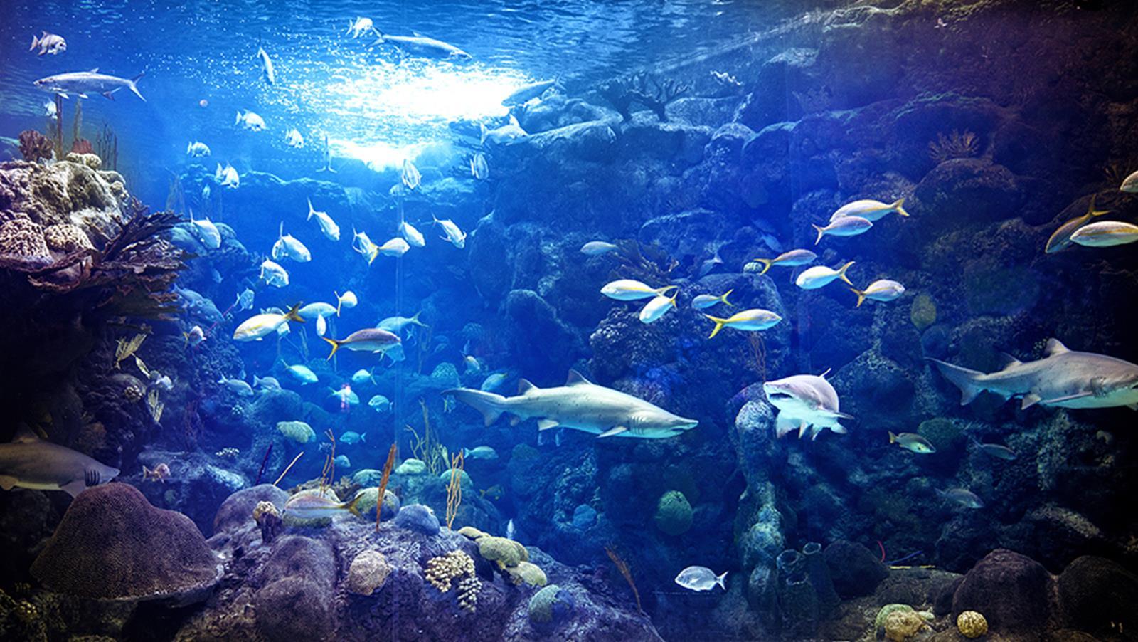 Coral_Reef_Homepage_Banner_961