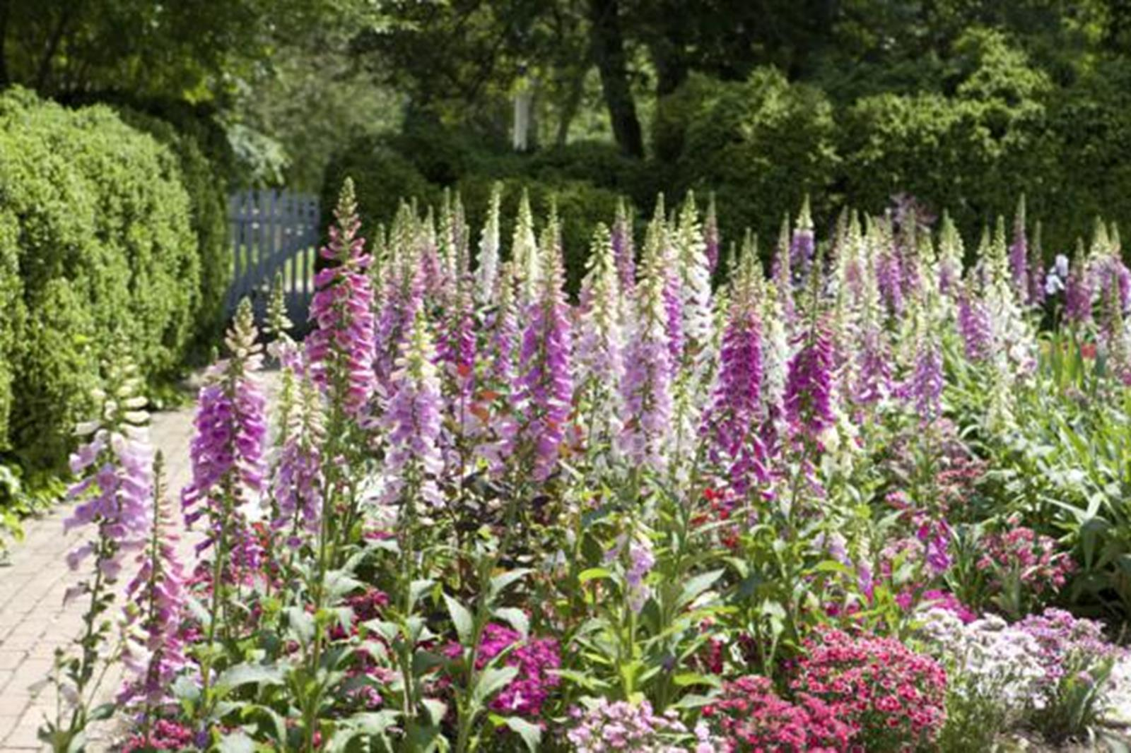 The Gardens Are One Of The Most Exquisite Sites In Colonial Williamsburg.
