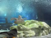 Turtle swinmming