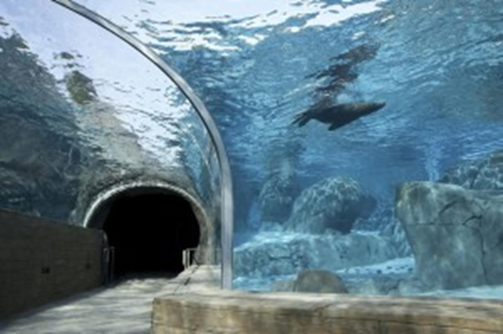 Sea Lion Sound Tunnel St. Louis Zoo Photo Courtesy of David Merritt St. Louis Zoo
