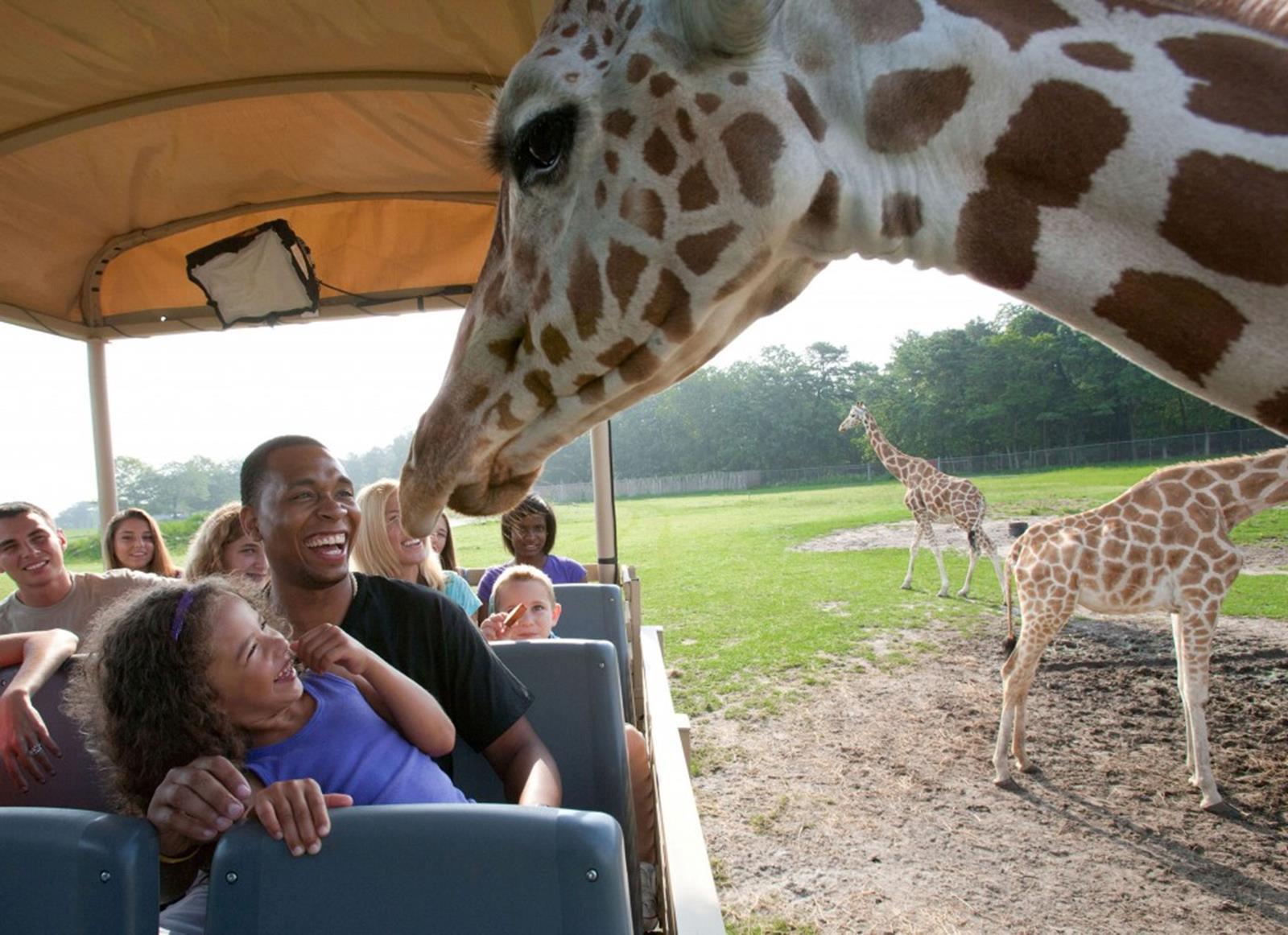 Safari Off-Road Adventure