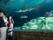 family looking at shark
