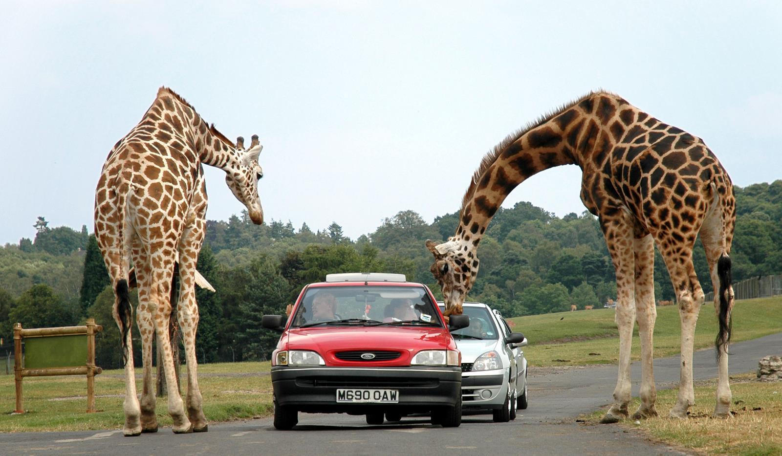 The Top Ten Safari Parks In The U S