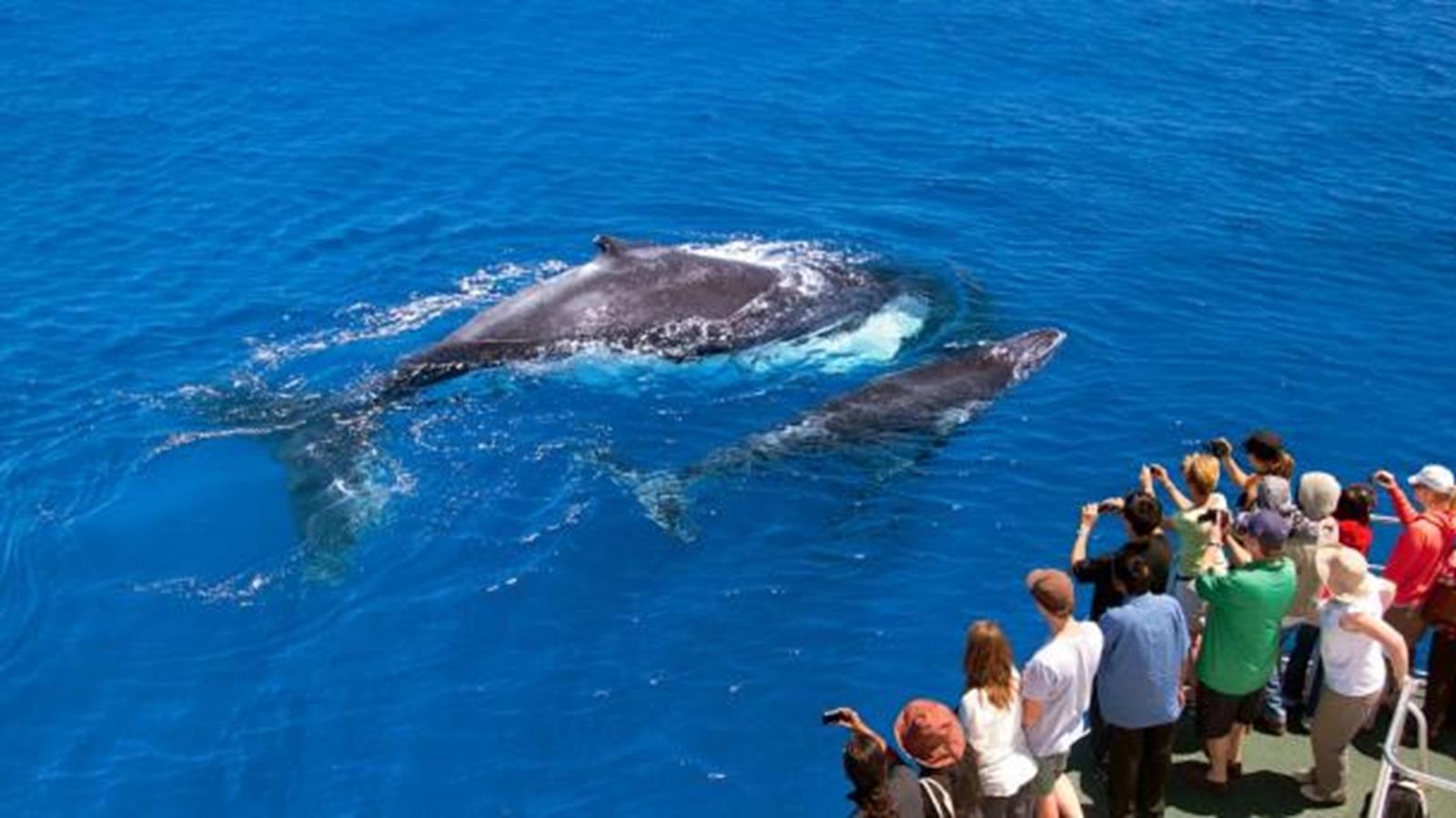 Credit http://www.australia.com/content/australia/en/articles/nat-whalewatching/_jcr_content/mainParsys/largeimagewithtext_1/imageSrc.adapt.609.medium.jpg