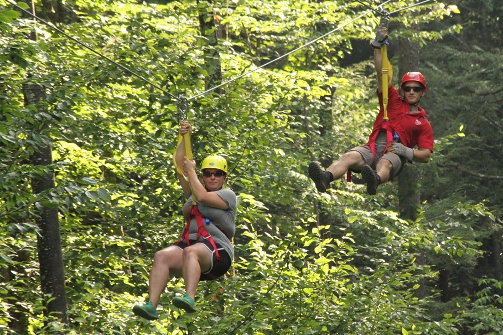 Tourists ziplineing through a canopy of trees.