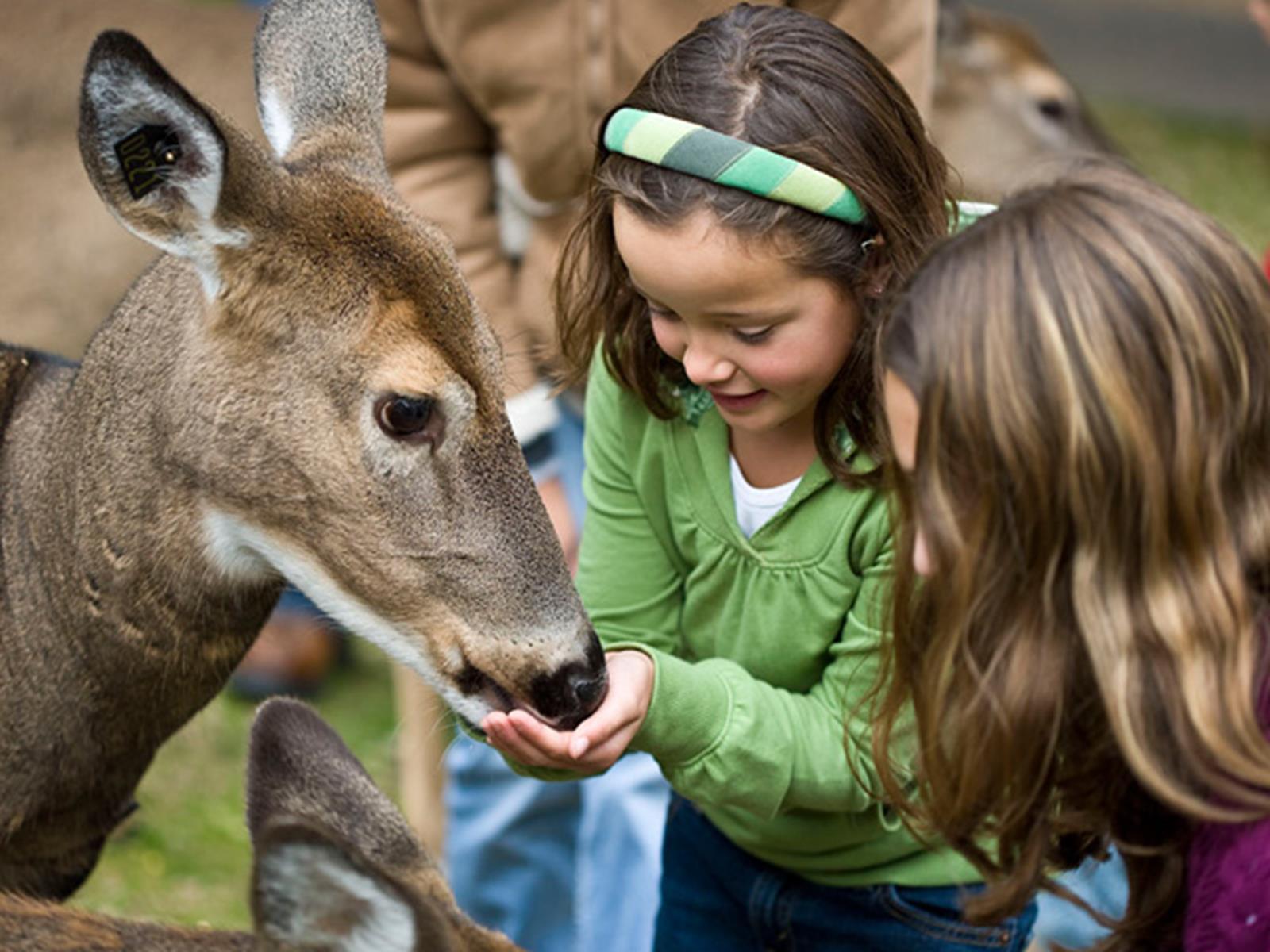 wisconsin_deer_park_01