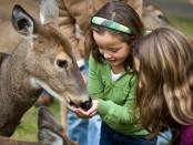 girls feeding a deer