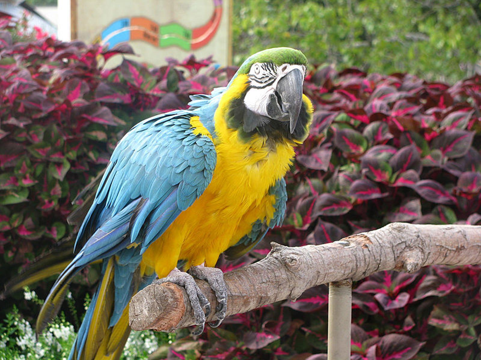 Blue and Yellow Macaw at Tulsa Zoo. Credit: Angela Severn