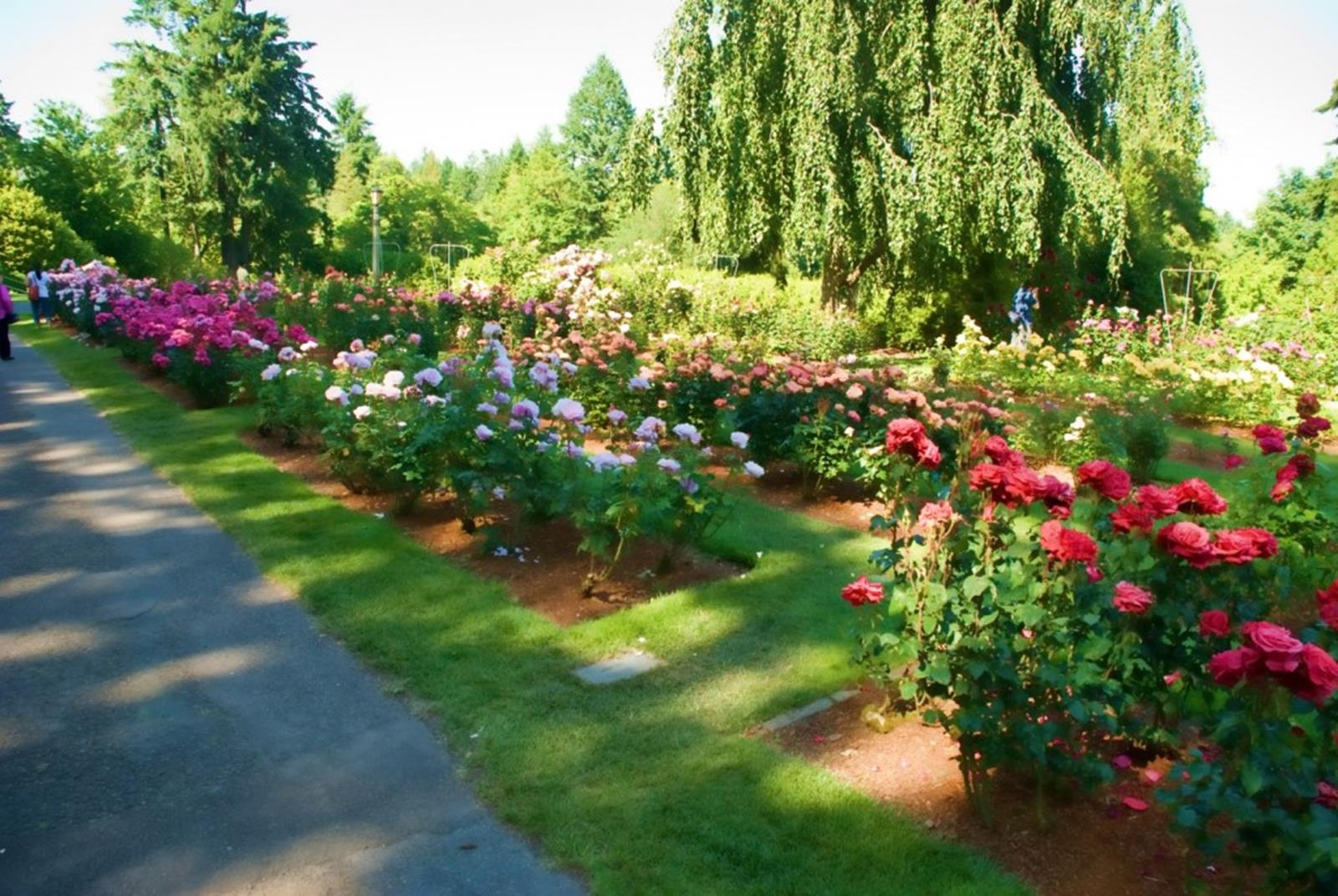 Free things to do in portland - International Rose Test Garden