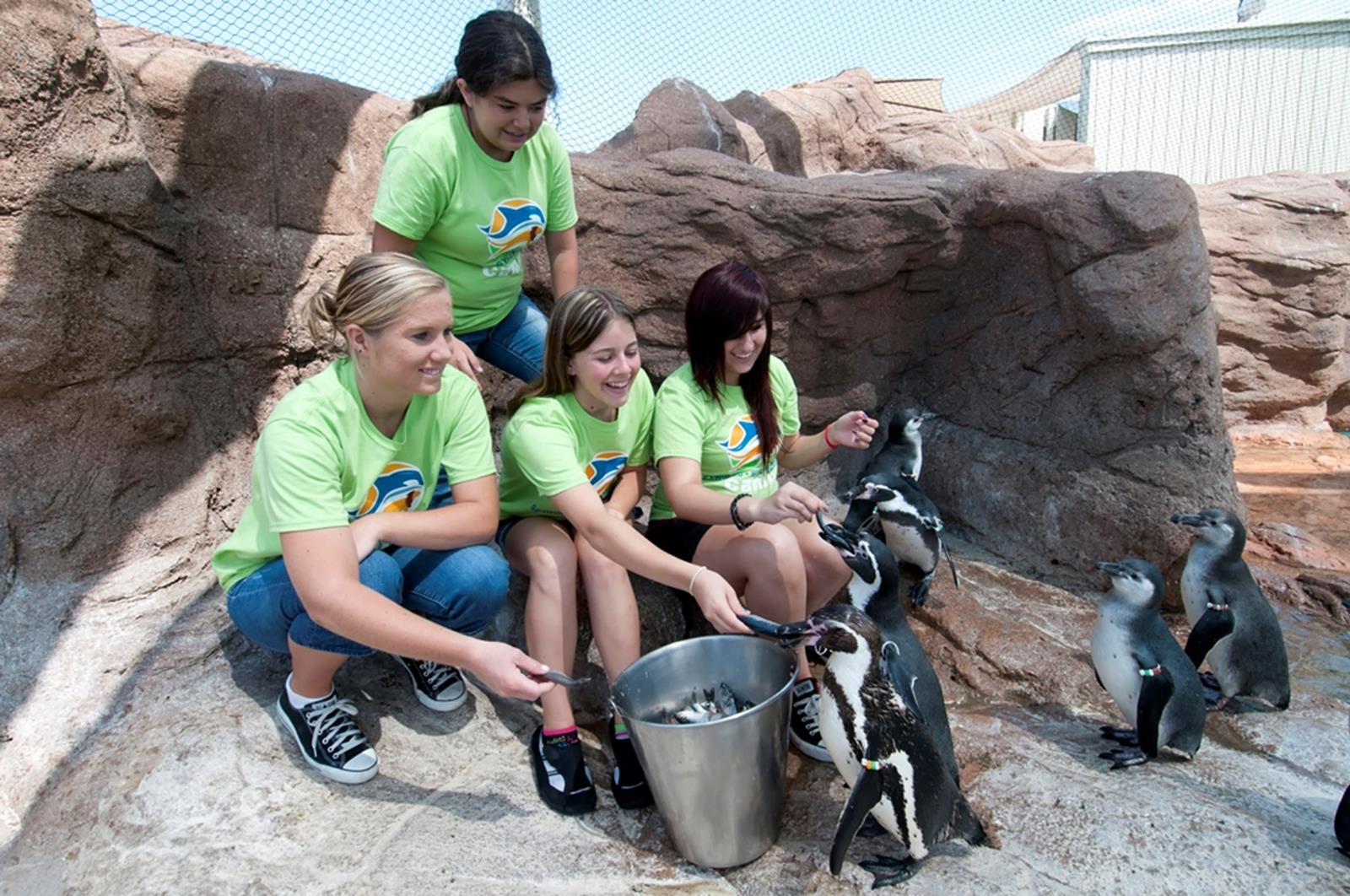 Sea World campers with penguins. Credit: Sea World San Diego