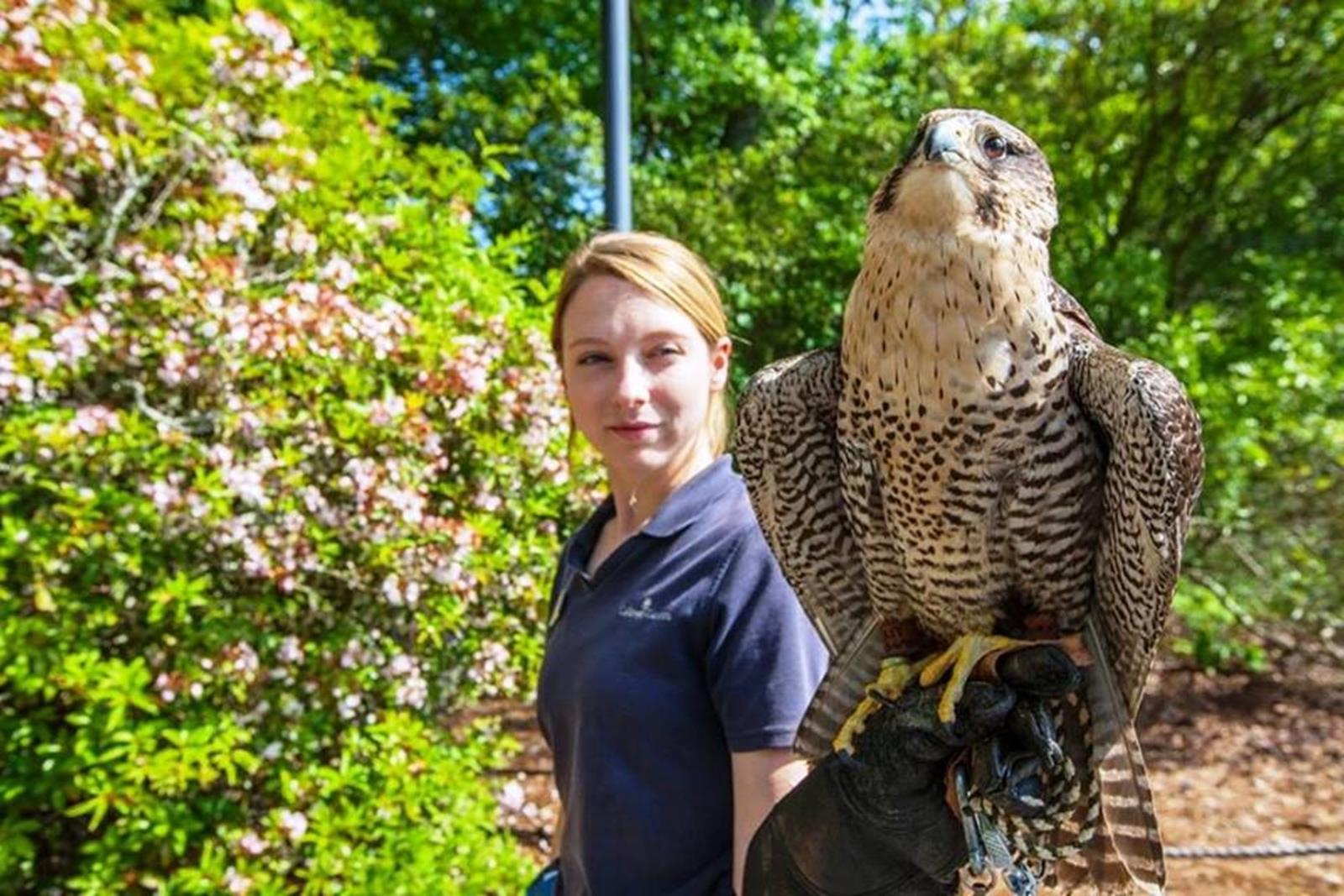 Birds of Prey program. Credit: Callaway Gardens
