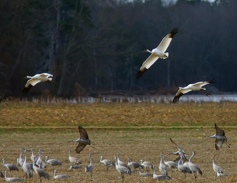 Decatur Wildlife. Credit: Decatur CVB