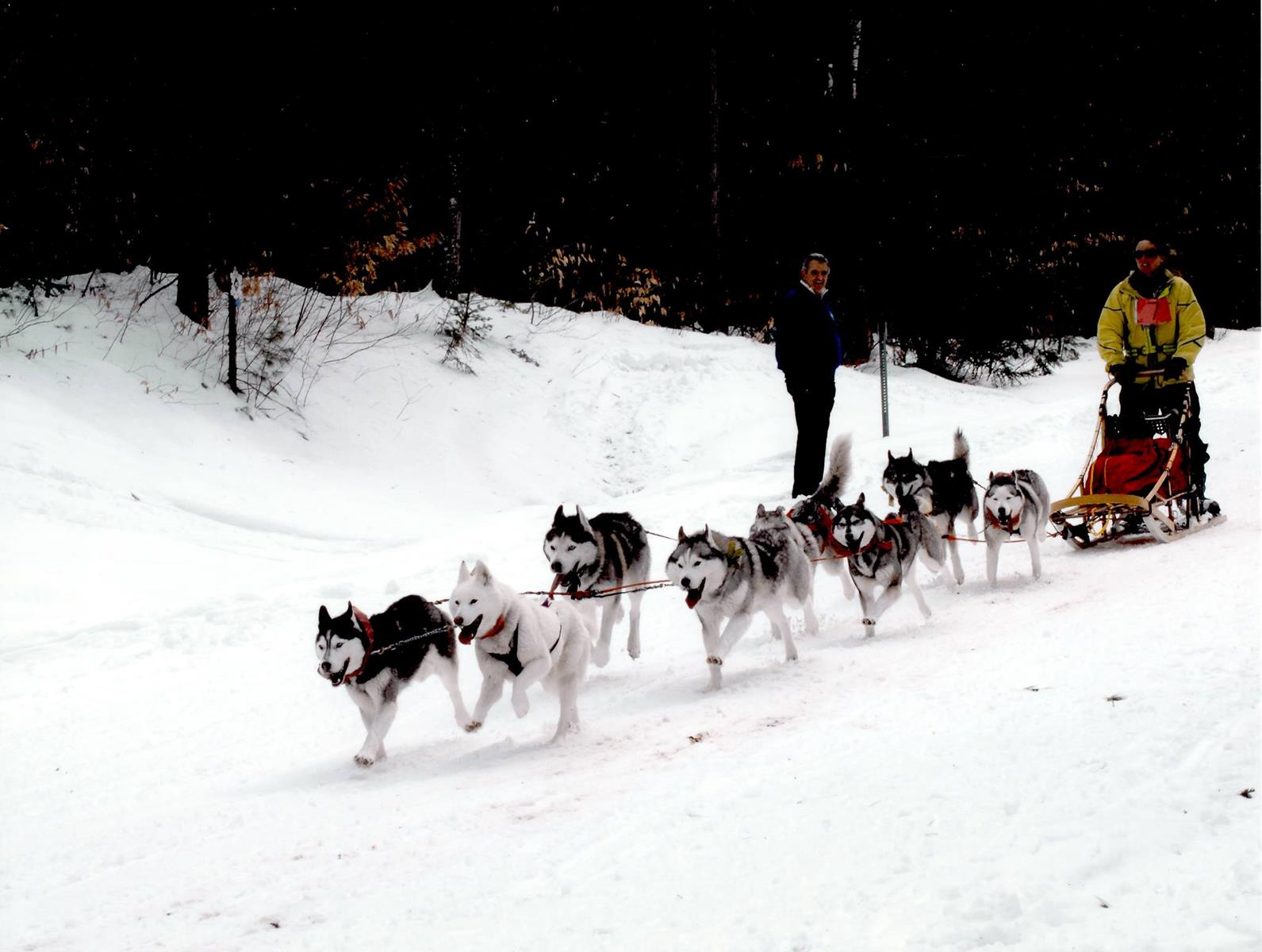 A dog sled tour. Credit: Barking Brook Sled Dog Adventures