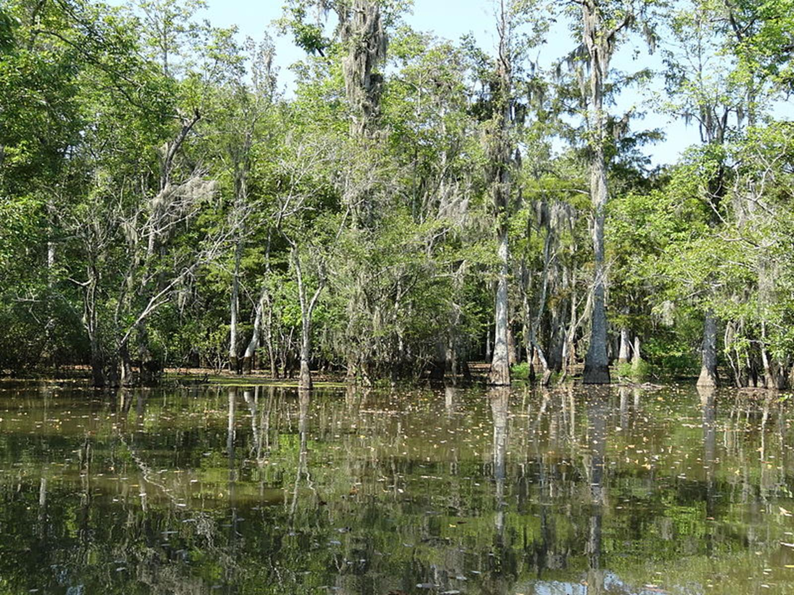 Louisiana Swamp. Credit: Nick Shield