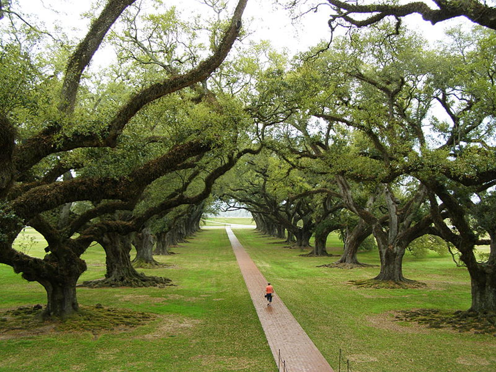 Oak Alley Plantation. Credit: Ronar