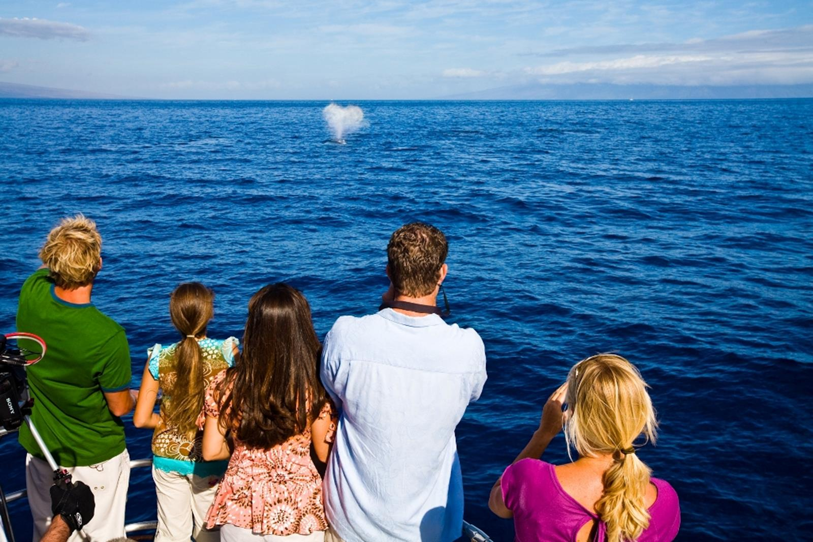 A group whale watching. Credit: Hawaii Tourism Authority (HTA)/Tor Johnson Island.
