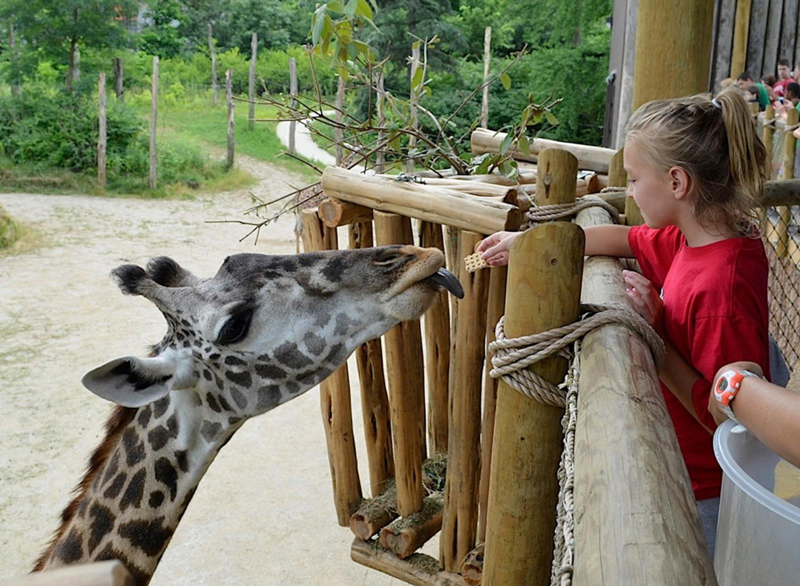Giraffe Ridge at Cincinnati Zoo. Credit: Michelle Curley