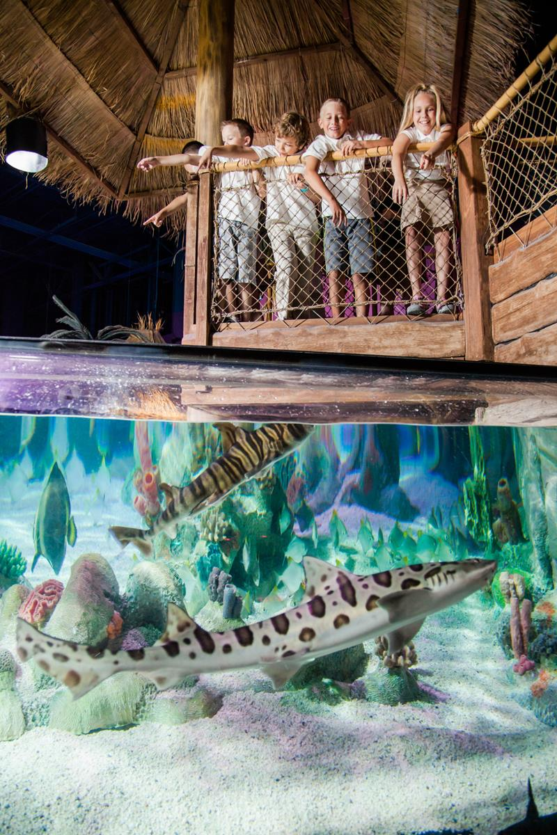 an analysis of the aviary the aquarium and eschatology Hands on a hard body i'm doubting that my 15 years with the aviary/aquarium was entirely fortuitous the positive needs of eschatology and the.