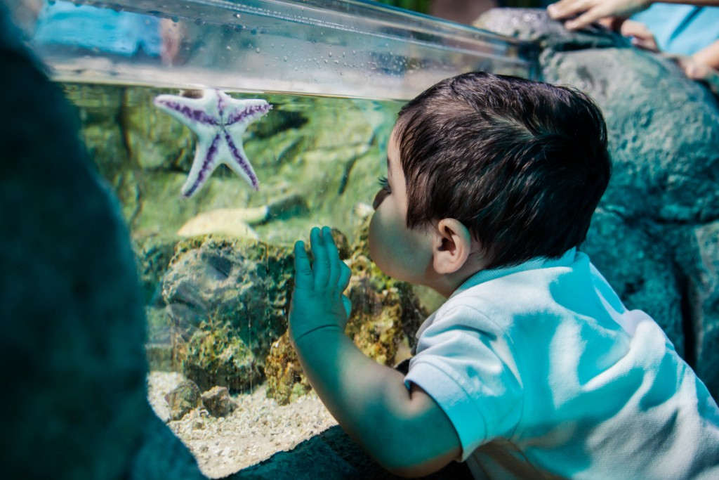Child_Seastar