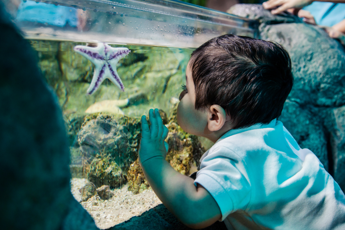 Teaching Kids to Love and Protect the Ocean at SEA LIFE