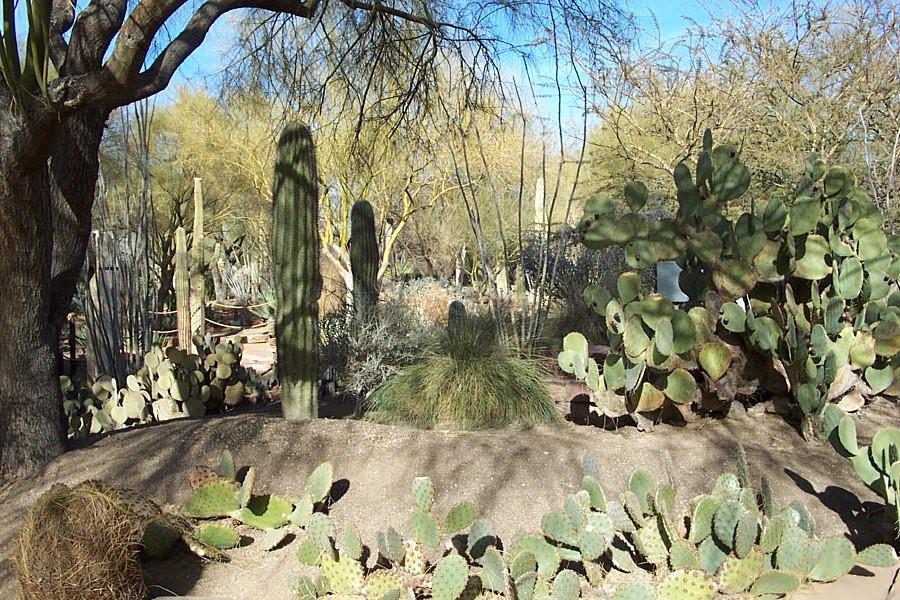 Ethel_M_Botanical_Cactus_Garden_1