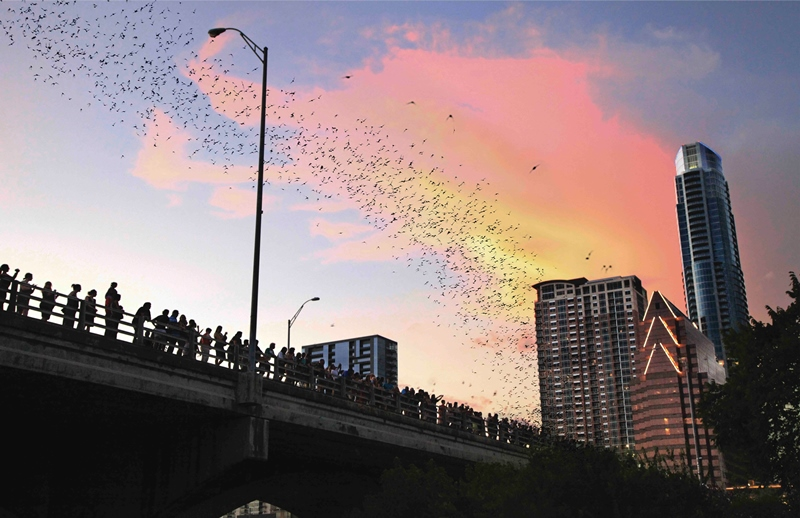 Bats emerge from Congress Avenue Bridge. Credit: Austin Convention & Visitors Bureau