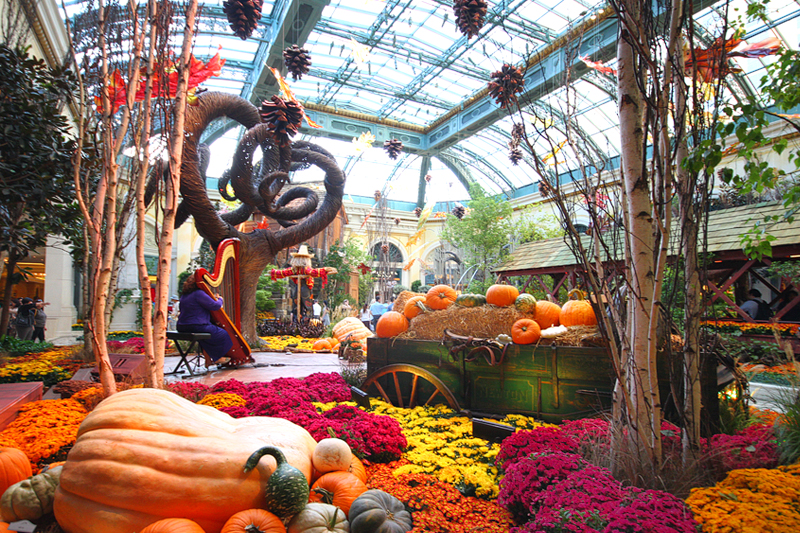 bellagio_conservatory_fall1