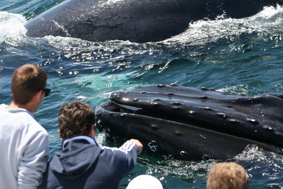 Seeing humpback whales. Credit: Hyannis Whale Watcher Cruises