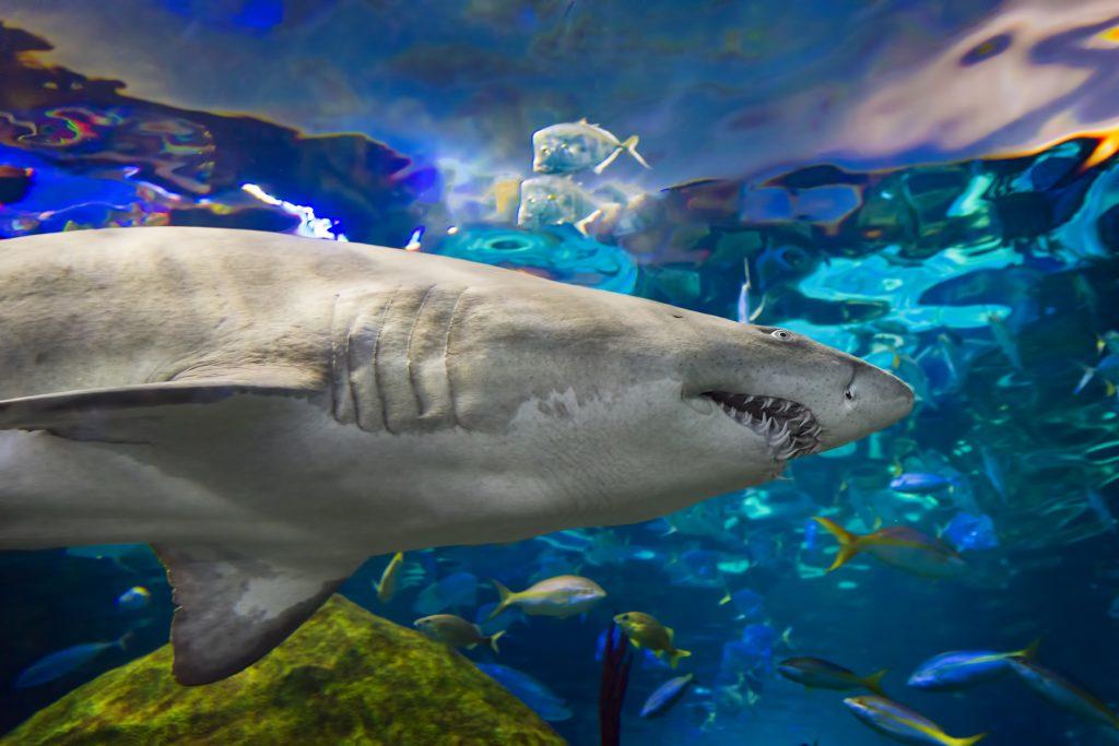 Ripley's Believe It or Not! Aquarium