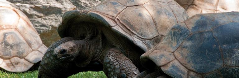 Philadelphia-Zoo-768x252