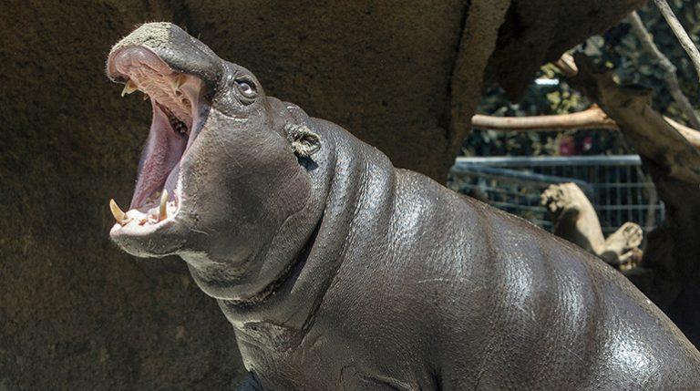 san-diego-zoo-768x429
