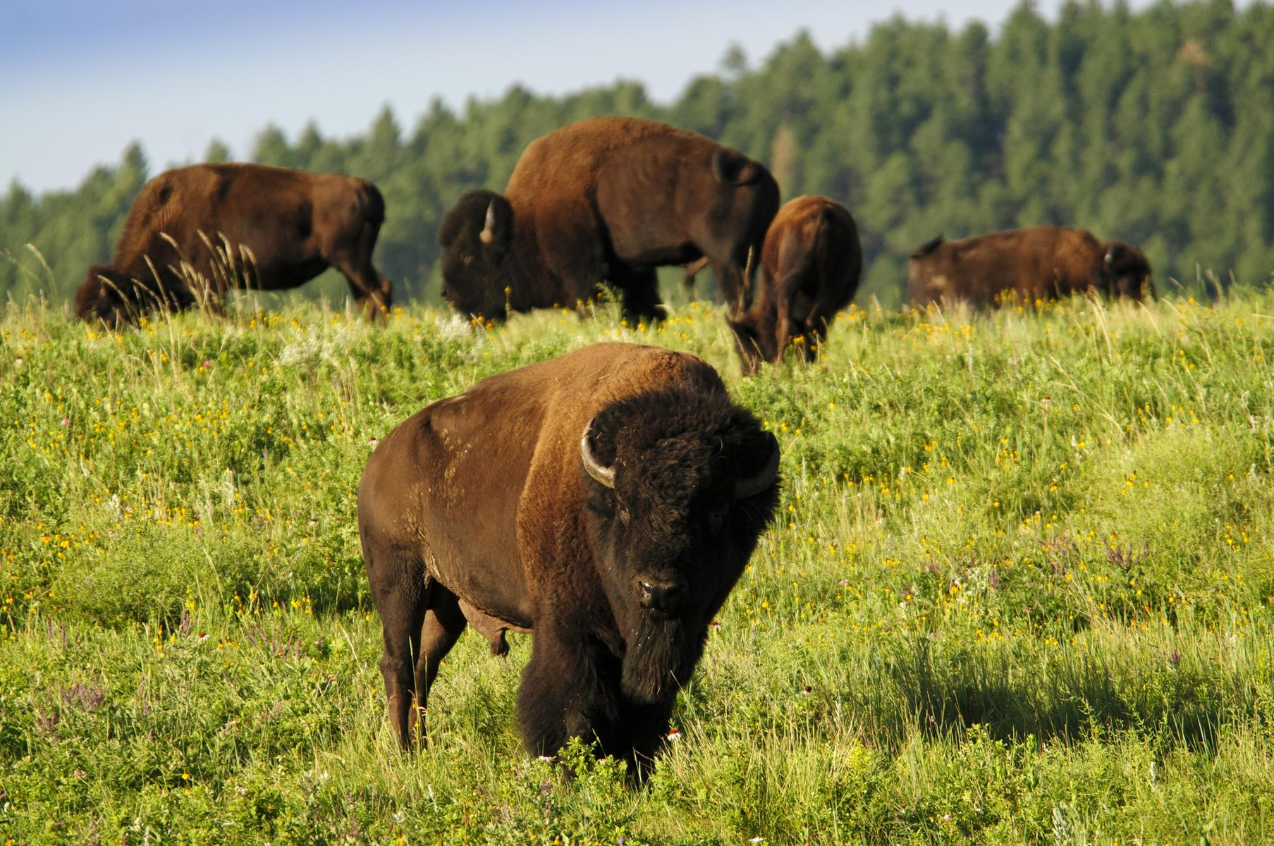 Attractions for the Adventurous in South Dakota