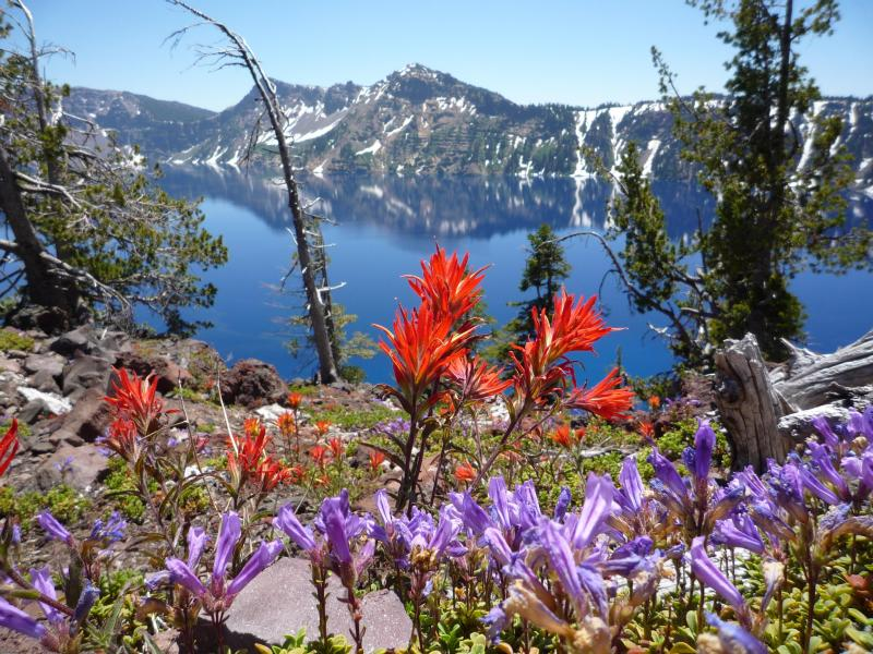 Crater Lake - Wildflowers