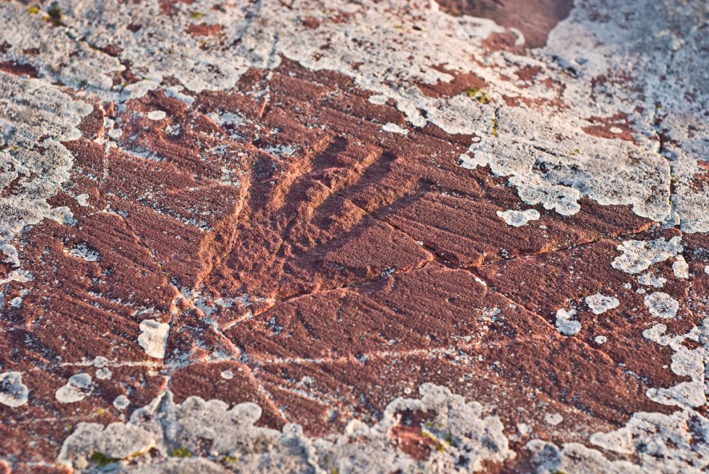 Jeffers Petroglyphs