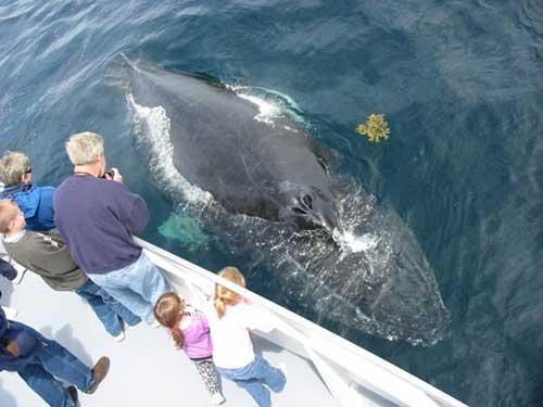 Cap'n Fish's Whale Watch