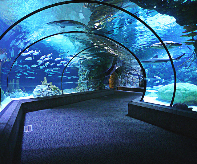 Omaha's Henry Doorly Zoo and Aquarium #1