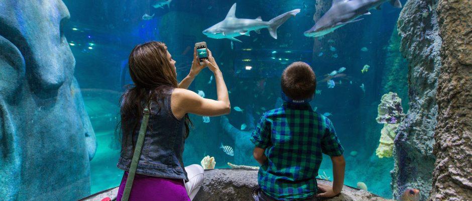 SL_Shark_Woman+Child