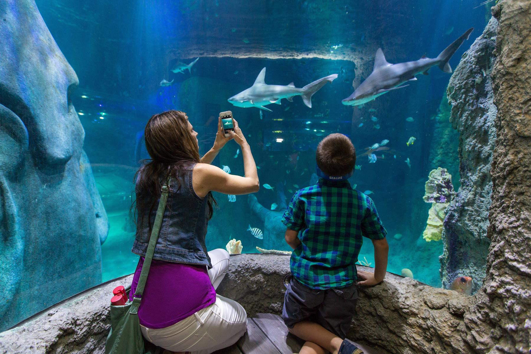 Students Explore the Ocean with SEA LIFE