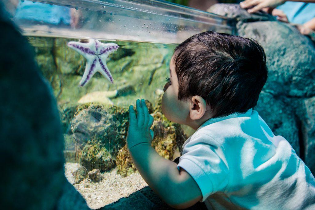 SL_Starfish+boy