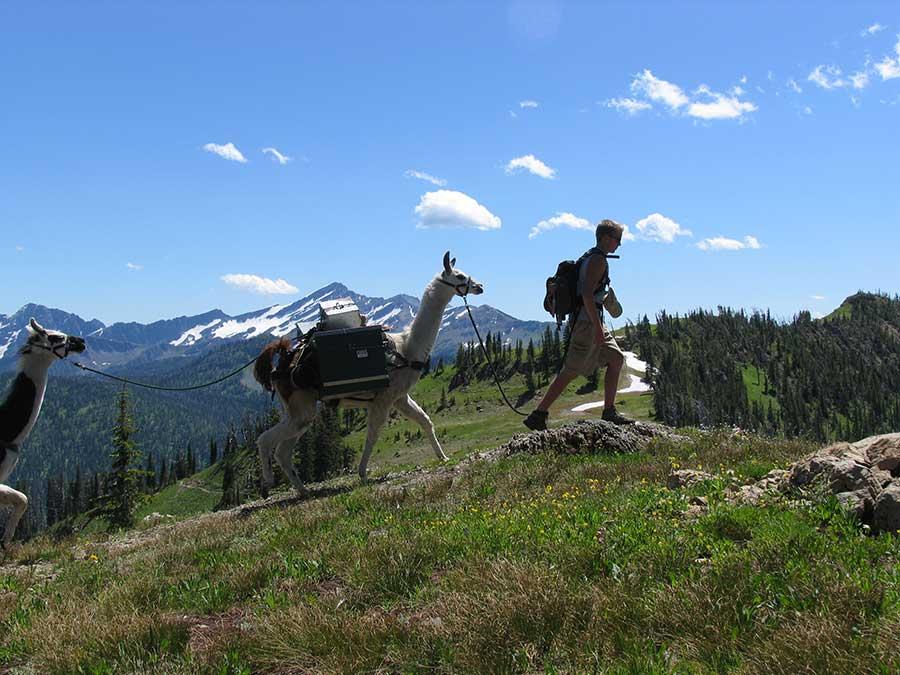 Swan-Mountain-Llama-Trekking-in-Montana