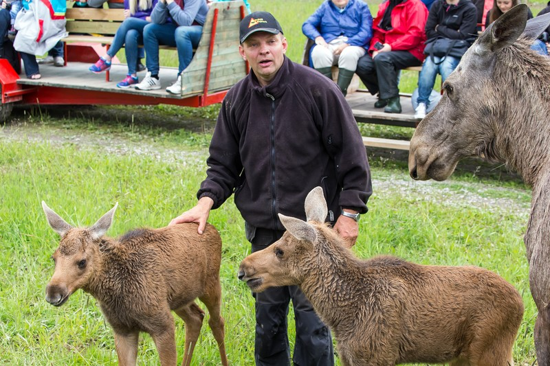 Gardsjo Moose Park - Credit Visit Vasteras