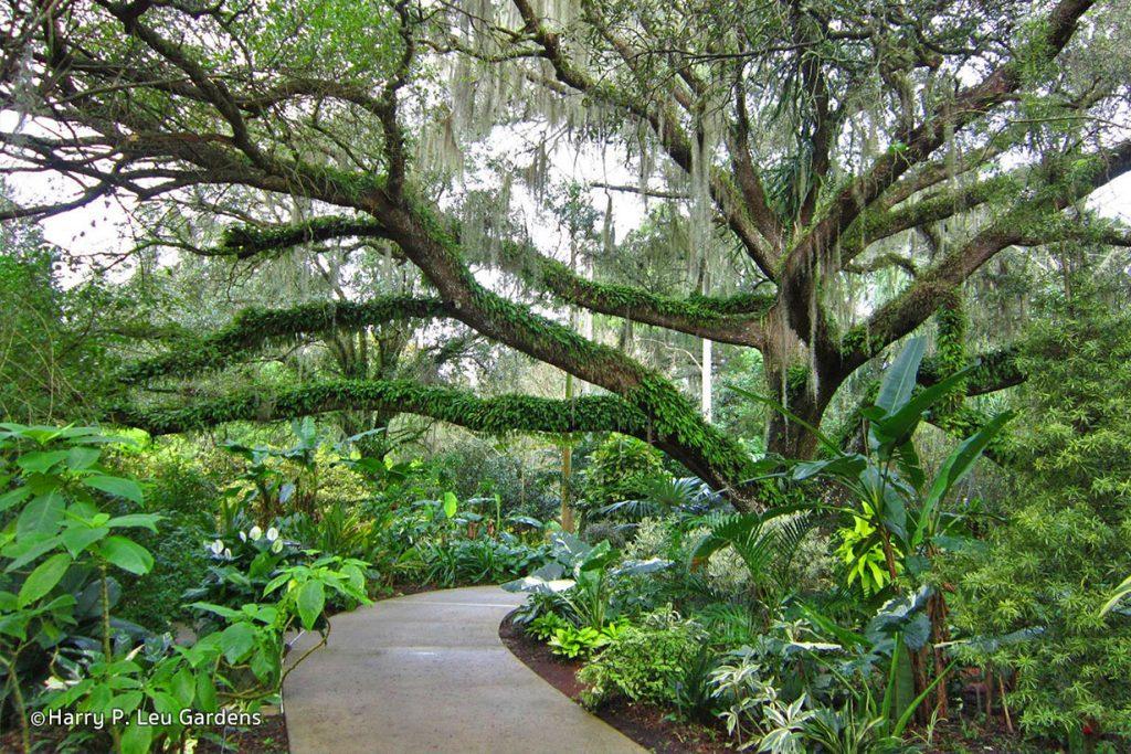 Harry P. Leu Gardens.