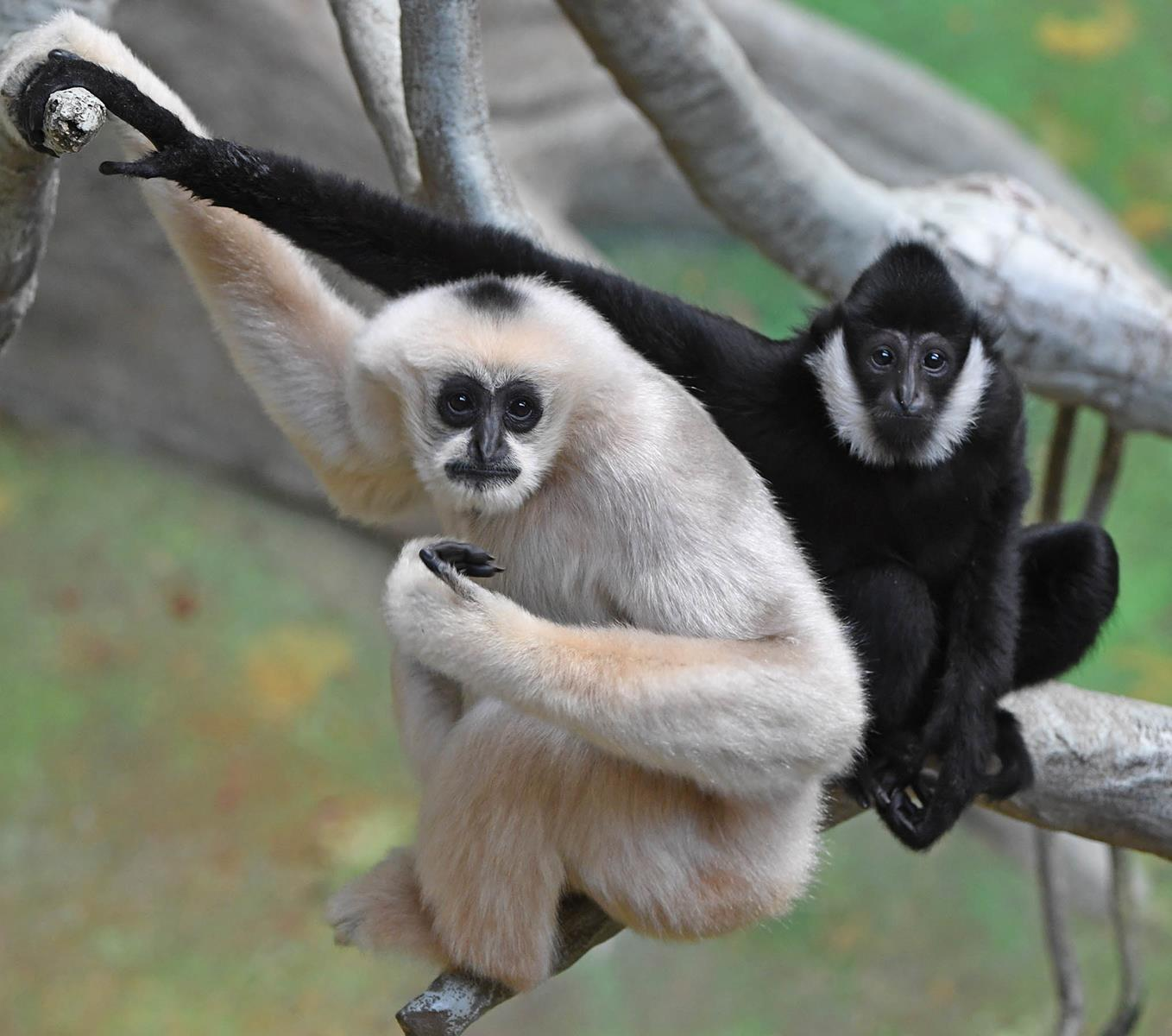 Observe Wildlife from Around the World at Brookfield Zoo
