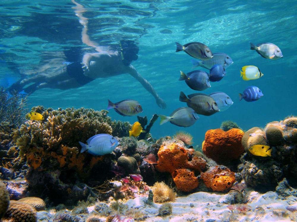 Cahuita Snorkeling
