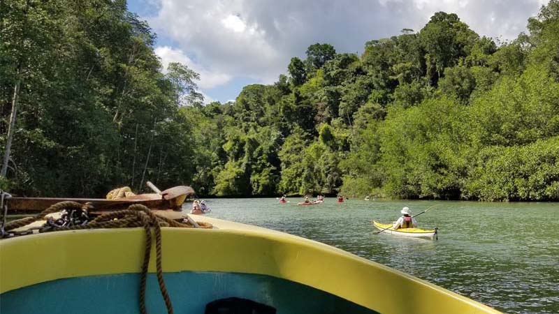 Osa Peninsula Rainforest Discovery Tour Kayaking