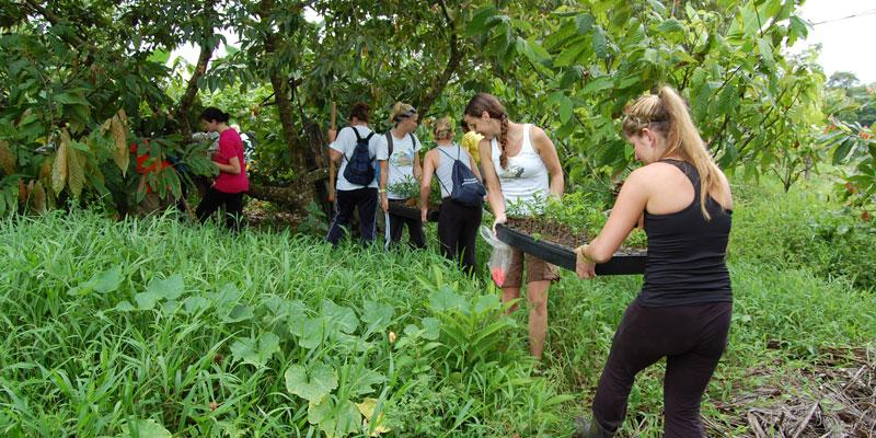 Science in the Tropics - Reforestation