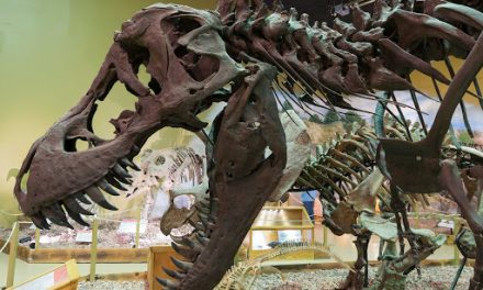 Three Places to Hunt for Dinosaurs in the Mountain West