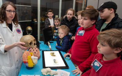 Students learn about brain anatomy and functions at the National Museum of Health and Medicine