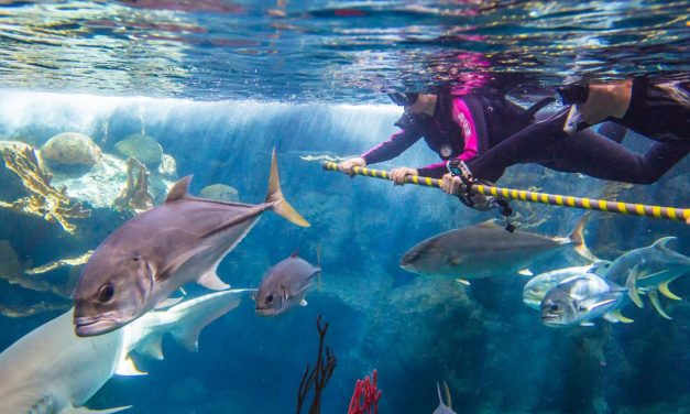 Explore Marine Biology in the Southeast with These Aquariums